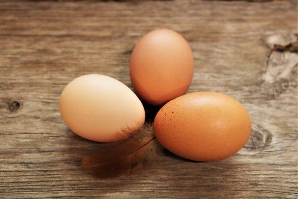Färska ägg gård hönshuset ödevata småland