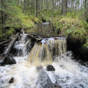 Gammelskogen historiska skatter
