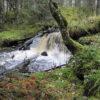 Skogsvandring Furudal Dalarna