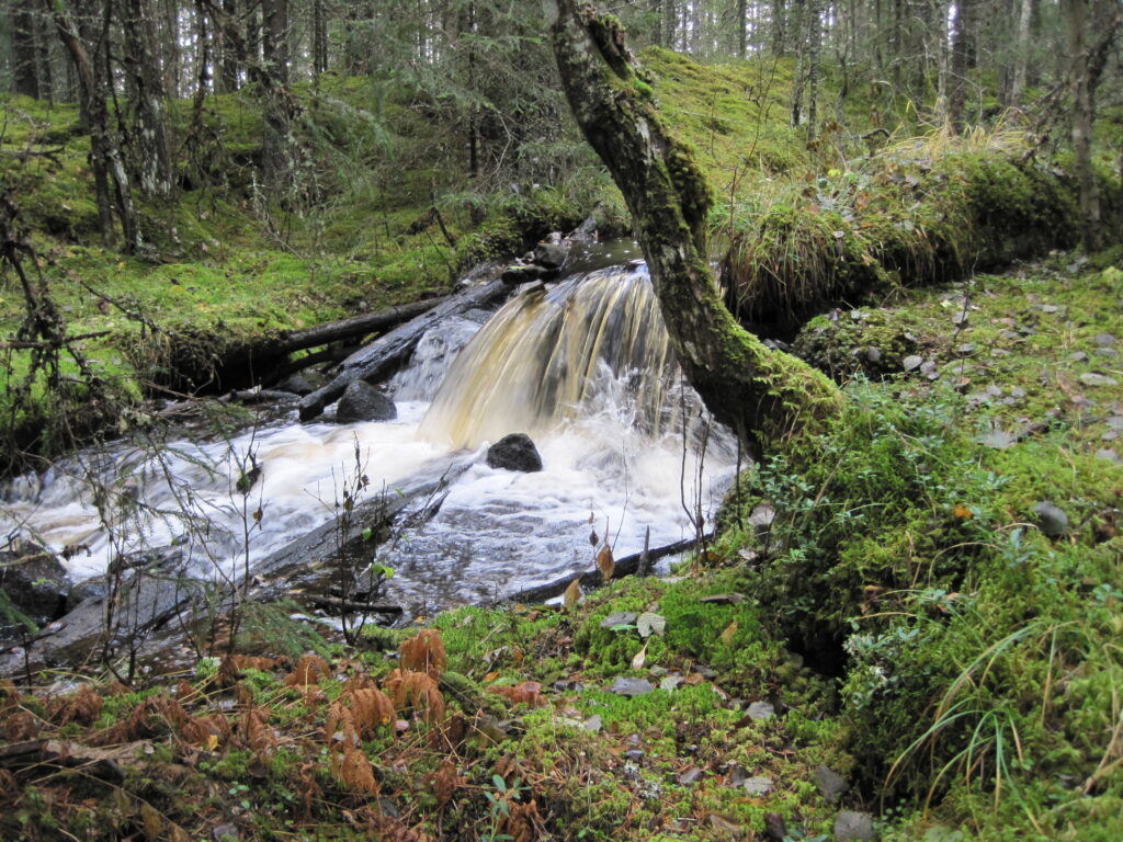 Skogsvandring Furudal Dalarna | Naturupplevelse sverige