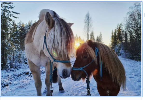 Möt julen i Furudal utforska lokala traditioner
